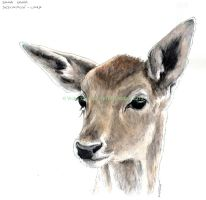 Fallow deer HEAD by VickyTico