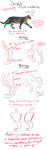 Cat anatomy tutorial/guidelines and tips [Legs] by Waterbender-Jay