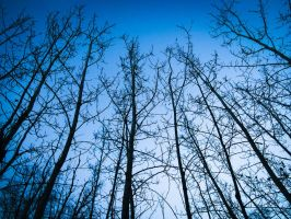 Trees by Teppon