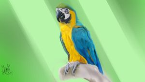 Blue Macaw by NoodleSuperPot