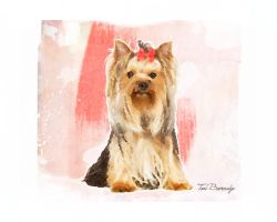 Yorkshire Terrier by ToriB