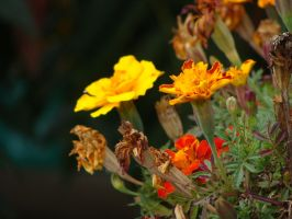flowers by Casiula