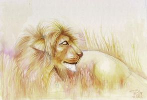 Lion2005 by Troiy