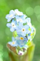 Little blue by pqphotography