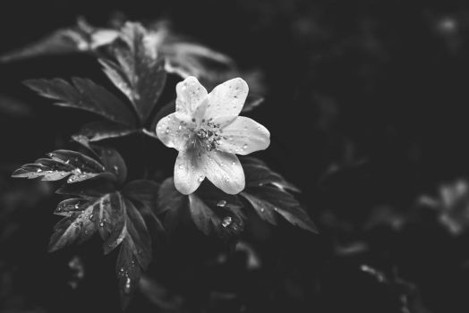 Black and white spring II by Poli91