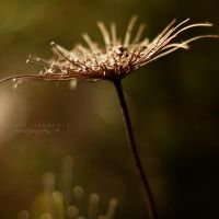 plants VII by leyli