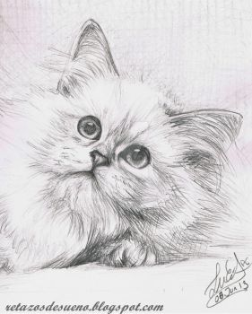Gato :3 by Lucia-95RduS