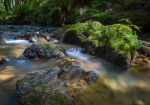 Purisima Creek by FeralWhippet