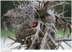 Love is building us a nest. by emca
