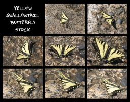 Yellow Swallowtail Butterfly Stock by Oddstuffs