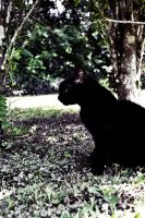 Lomography cat by perrr03