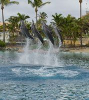 STOCK - Seaworld 2013-84 by fillyrox