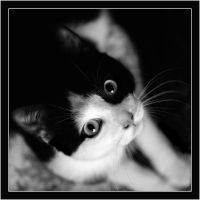 Tit Chat BW by angiiee