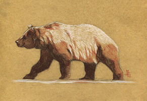 Bear - 100animals100days by wolf-minori