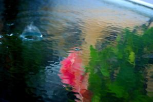 Colorfull Reflections by Dustinpg