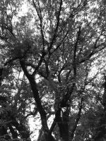 Branched Out by marieceleste