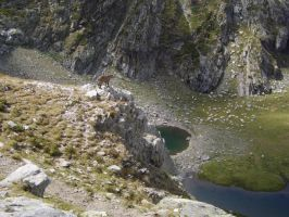 Ibex an lake by FraterSINISTER