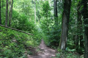 Palatinate Forest Stock 14 by Malleni-Stock