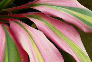 Plant Flamingo by Jacia