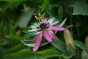 view to passionflower by ingeline-art