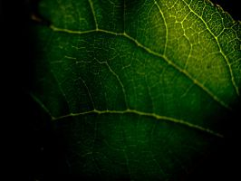 Green Leaf Cells by Youcef07