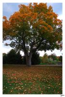 autum tree by lynsea