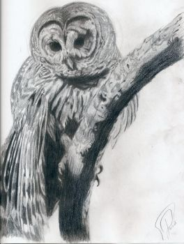 A Barred Owl by ClearAcidDragon