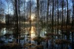 the swamp by Vanillebaer