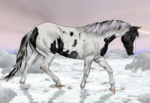 Black Tovero Paint Horse in Snow by painteddreamsdesigns