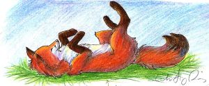 Rolling Fox by Joava