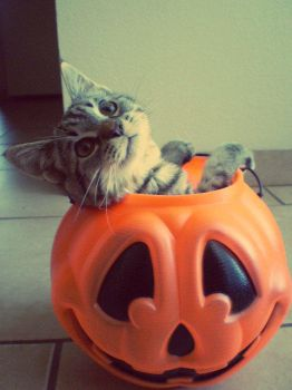Happy Halloween Kitty by Madame-mari-mortem