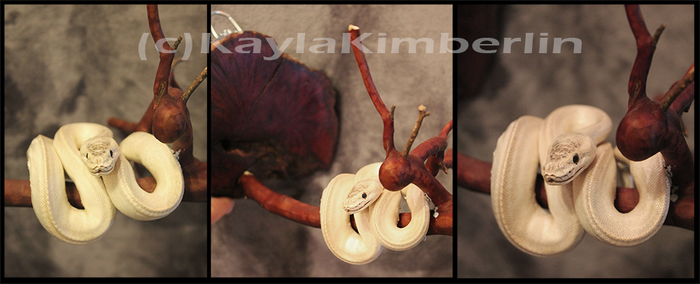 Taxidermy Super Mojave Ball Python by BluesCuriosities