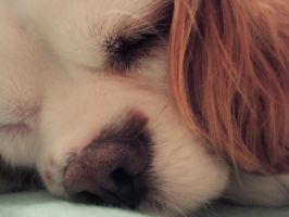 Snoozing 2 by Shelby-is-Crazy