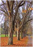 November Trees by Val-Faustino