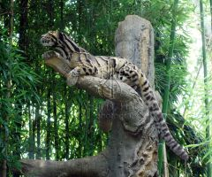 Clouded Leopard V by AprilDHallPhoto