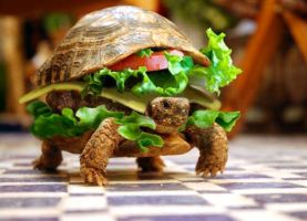 HAMBURGER TURTLE by BloodyLily203