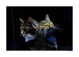 Two Cats by thejamcascru