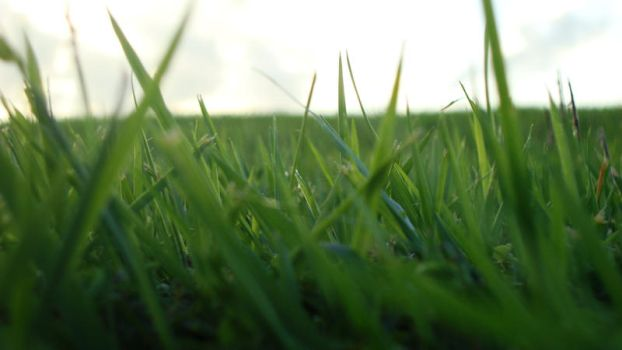 Patch Of Grass by BluefireLee