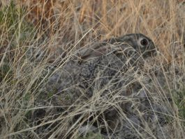 camoflaged hare by jynto