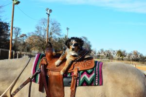 Pup in the Saddle by siannajmj