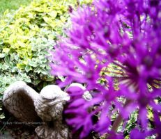 Allium and eagle by LadyxWinter