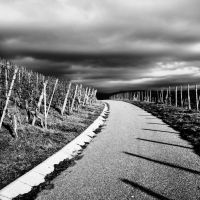 Vineyard and Sky by thenata