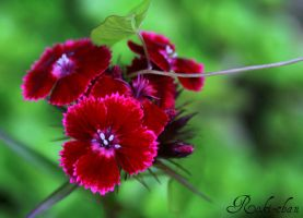 Red flower _01 by dEVILoFThegROTESQUE