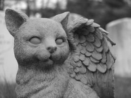 Winged Cat by rayc33