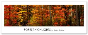 Forest Highlights by Julian-Bunker