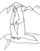 marmot by pariahpoet
