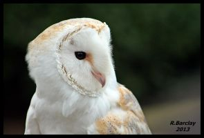 Barn Owl Sidefacing by skeletowl