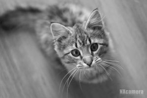 The Kitty Series - 1 by NXcamera