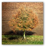 leaves of a gone year by Mittelfranke