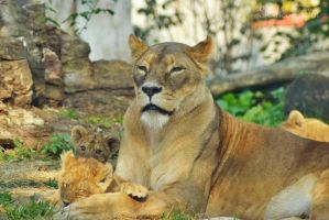 Mother Lion with Its Babies by WorldsInWorld